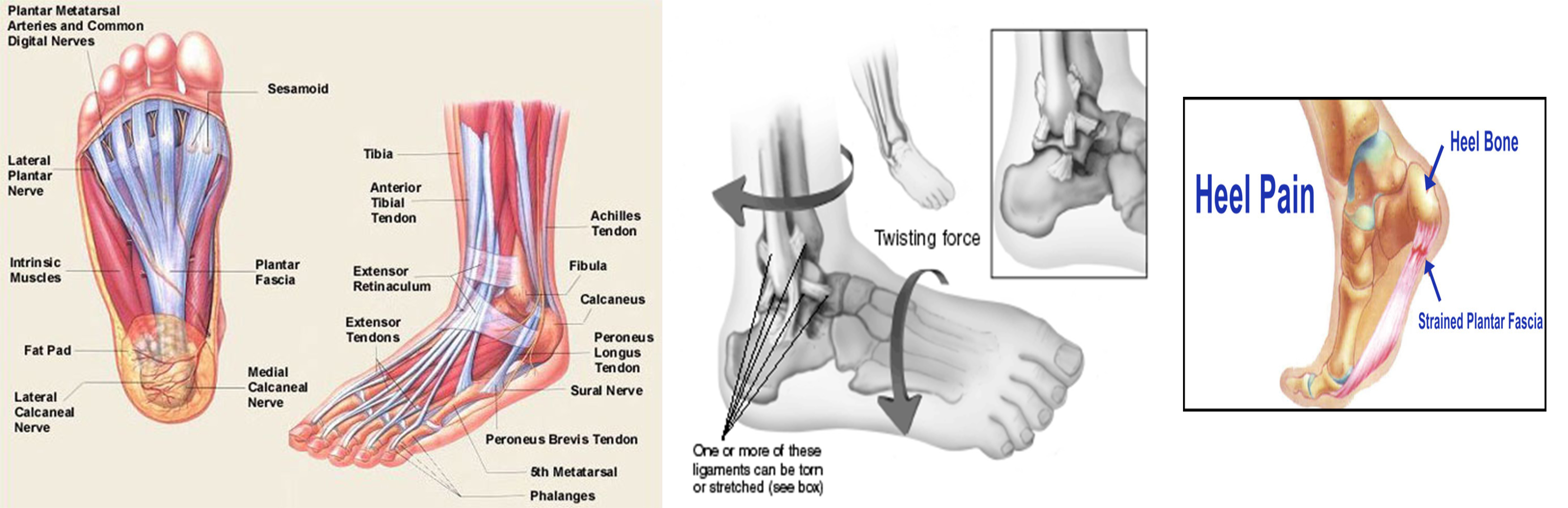 Foot and Ankle Pain - Singapore Orthopaedic Centre